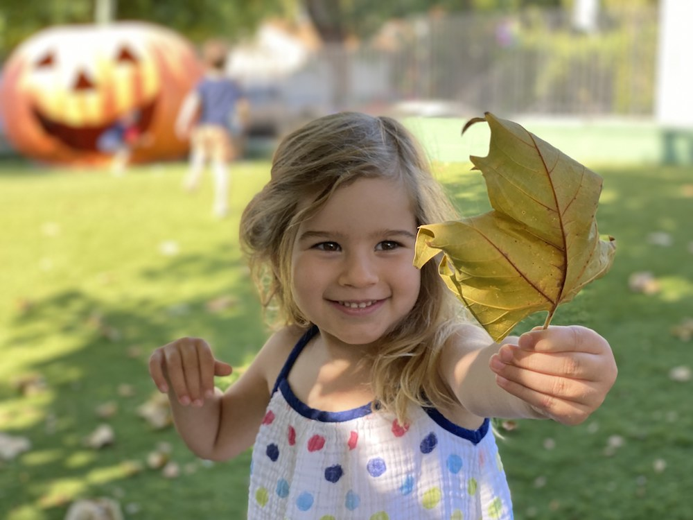 How to learn with leaves